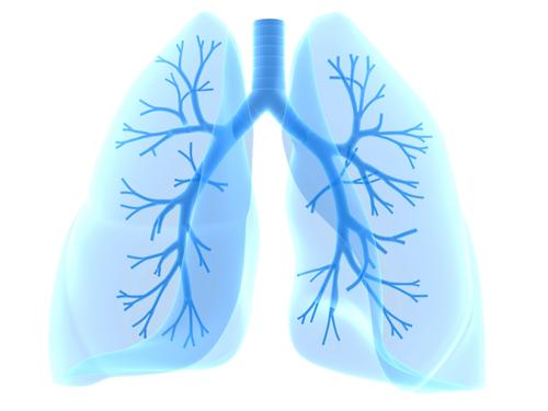 Schema einer Lunge in Blau