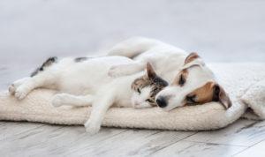 schlafende Haustiere